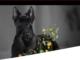 Purian Pro Plan Hundefutter gewinnen